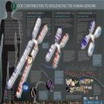 Free Human Genome Poster