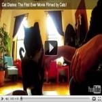 Friskies Explorers Online Cat Community