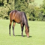 Sample Of Winnies Horse Treats