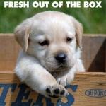Nutrabar For Your Dog